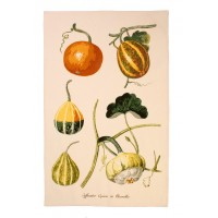 RHS Pumpkin Cotton Tea Towel