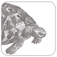 Tortoise Coasters - Thornback & Peel - Set/4