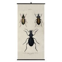 Beetles Wall Chart - Wellcome Collection