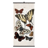 Butterfly Wall Chart - Wellcome Collection