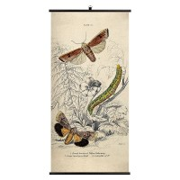 Moth Wall Chart - Wellcome Collection